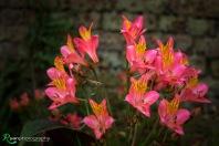 Flowers of Lullingstone