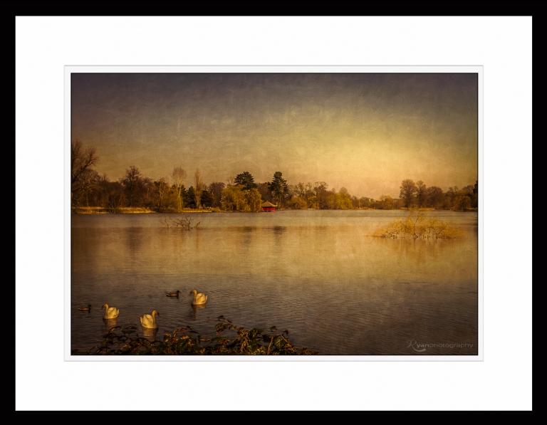 Hever Castle - More Swans