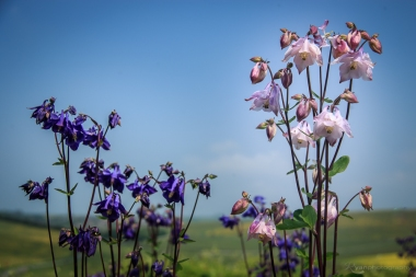 From the fields at Birling Gap
