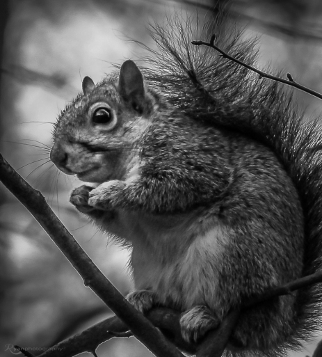 Squirrel from Manor Park Country Park