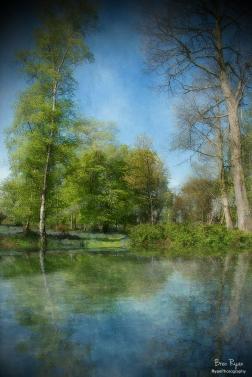 Ashenbank Woods - Digital Art
