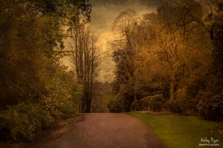 A photograph of one of the paths that winds through the estate at Nymans in West Sussex