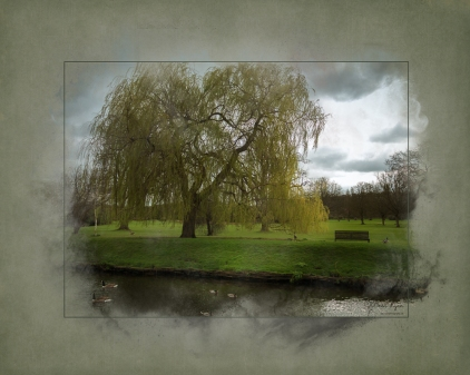 Weeping Willow- Hall Place