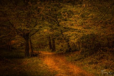 April Shower to Ashenbank Woods
