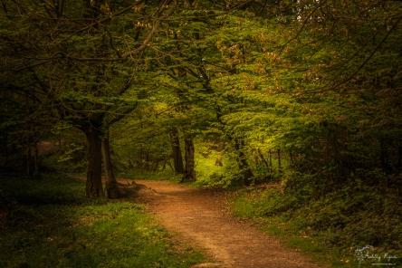 Ashenbank Woods