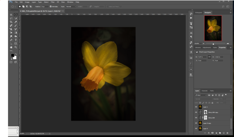 Daffodil after texture