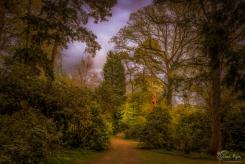Woodland Trees taken at Hole Park in Rolvenden