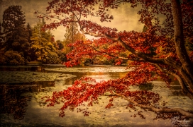 Autumn colours of Sheffield