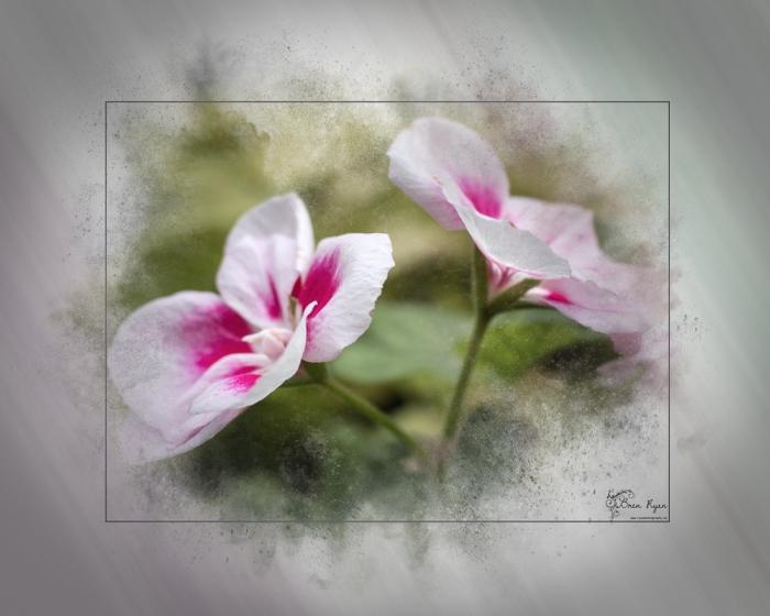 Dainty Pink Flowers