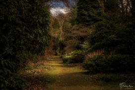 Doddington Woodland Walk