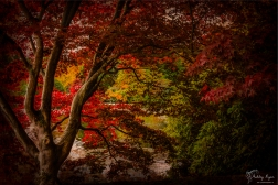 Autumn colours of Sheffield Park Gardens.