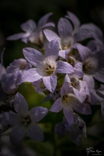 Dainty Purple Flowers