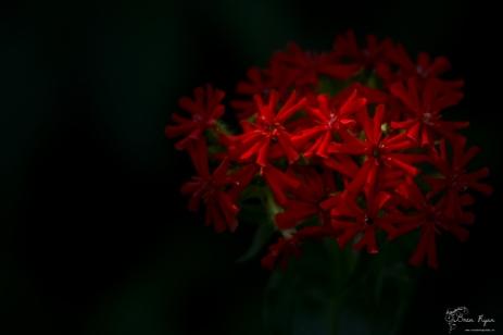 Red flower from Beech Court