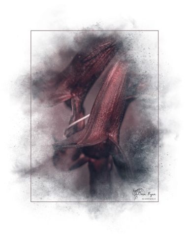 A photograph of a flower taken at The Salutation in Sandwich, processed in Lightroom and given a Powder Paint Effect.