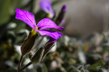 Flower in wall of Mote