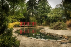 The Japanese Garden at Broadview Gardens