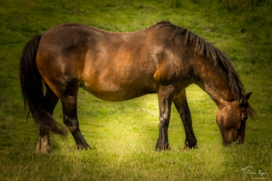 A horse in the field at Mount Ephraim Gardens