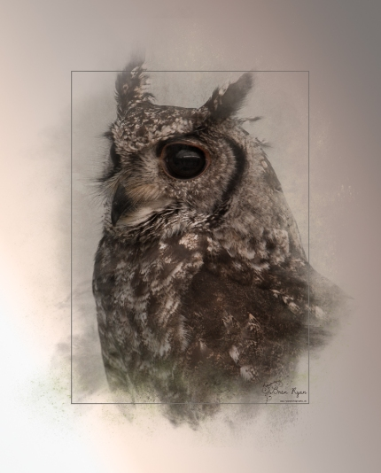 Photograph of an owl taken at Hall Place in Bexley - Powder Paint Effect with Box Outline