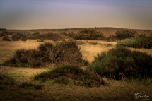 The dunes of Dungeness