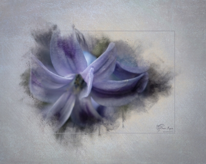A photograph of a purple flower taken at Hall Place Greenhouse processed with a Powder Paint Effect.