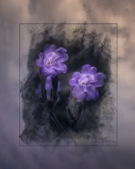 A photograph of purple flowers from Great Comp Gardens processed in a Powder Paint Effect