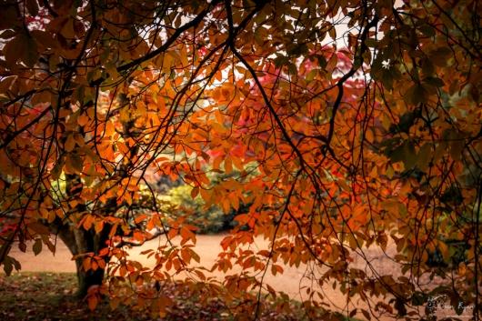 Sheffield Park Gardens - Autumn Leaves