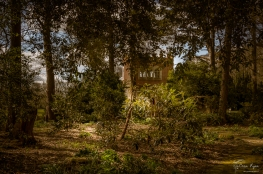 Looking back at the Folly from the woodland area of Doddington Place.