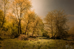 Through the glade Ashenbank Woods
