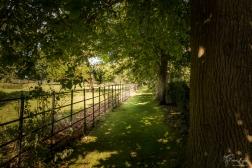 Treeline Walk