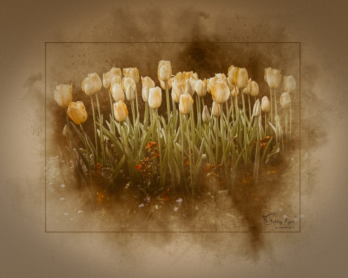 A photograph of tulips taken at Great Dixter House and Gardens processed with a Powder Paint Effect