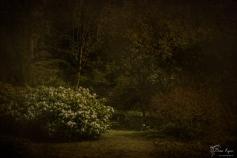 Woodland at Doddington