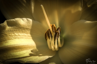 A photograph of a yellow flower taken at Nymans in West Sussex