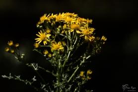Flowers of Beech Court