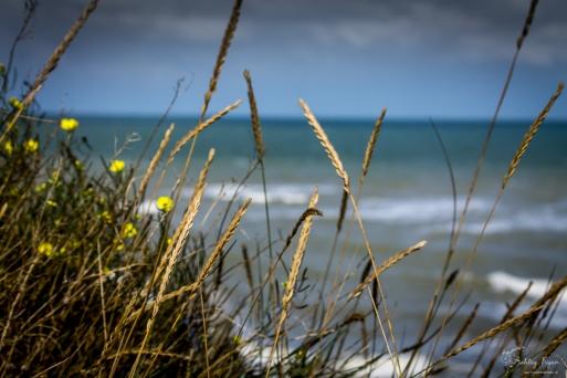 Grasses on the beach