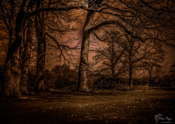 Hole Park Trees