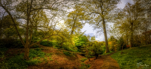 Panoramic of woodland area Hole Park Rolvenden