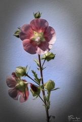 Flower in oils