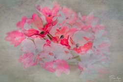 A paint effect given to a photograph of red flowers.