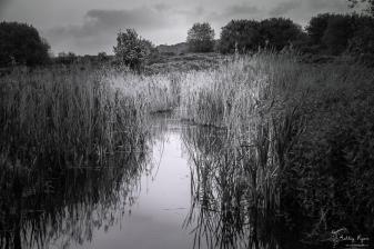 Landscape at Northward Hill Nature Reserve