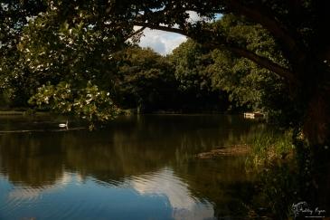 A photograph of the River Darent near Lullingstone Castle, near Eynsford, Kent taken in August 2016