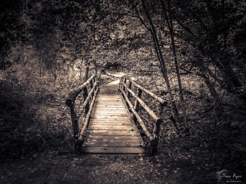 Wooden bridge at Sheffield Park Gardens