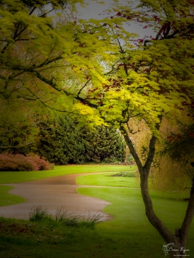 A photograph of one of the many paths at Wakehurst Place.