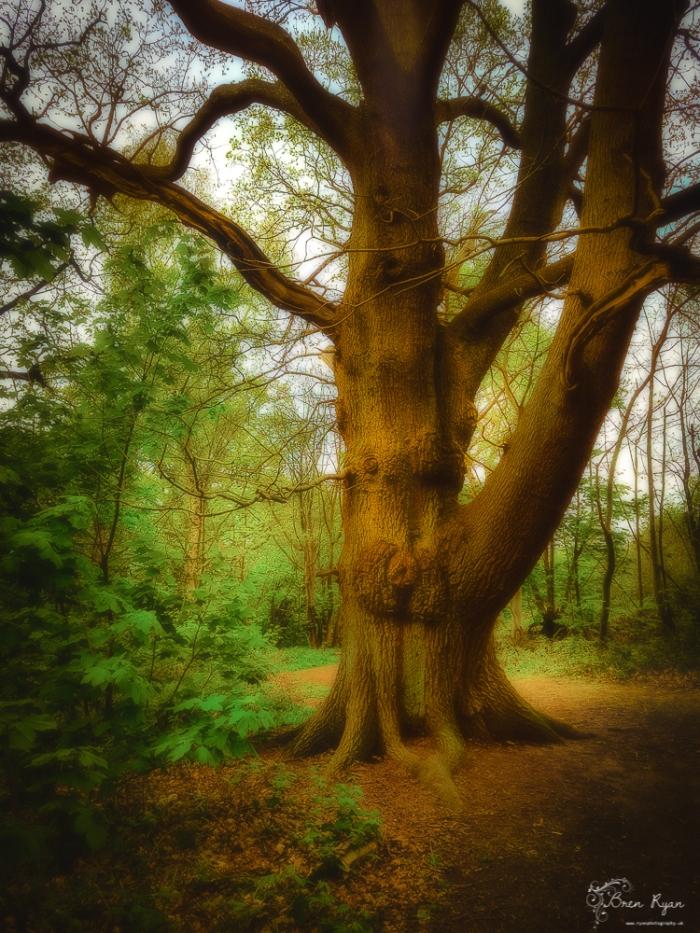 Treet At Hole Park