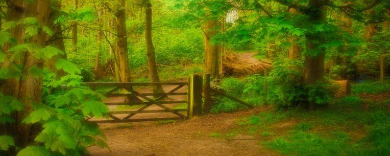 cropped-through-the-gate-img_7762-edit1.jpg