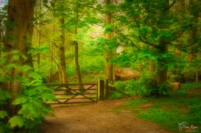 A photograph taken at Ashenbank Woods at Cobham near Rochester in Kent on a spring morning.
