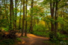 A photograph taken in Spring 2017 of the Ashenbank Woods, near Cobham in Kent,