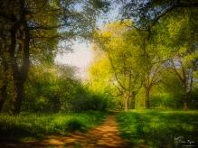 Oil Paint of Ashehank Woods