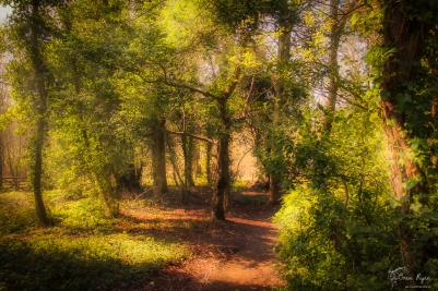 A photograph of Woodland at Battle Abbey in East Sussex.
