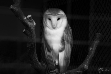 A photograph of an owl taken at Jamb's Owls located at Hall Place in Bexley.