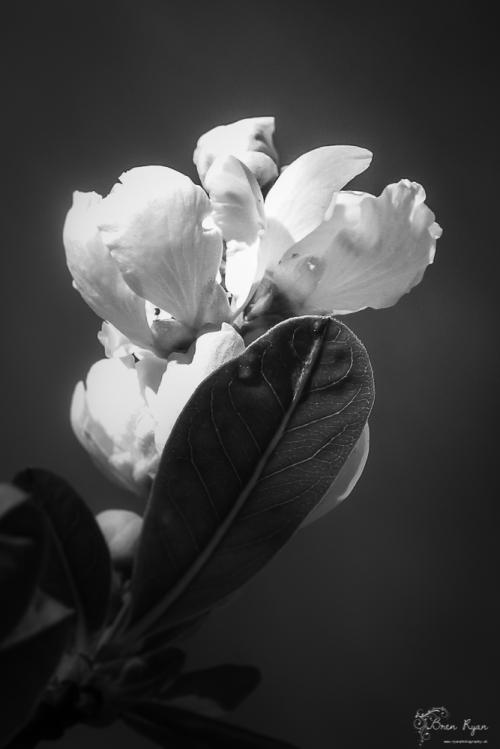Flower from Kearsney